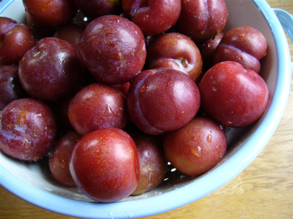 Importers of dry plum in india | what are the best prunes to buy?